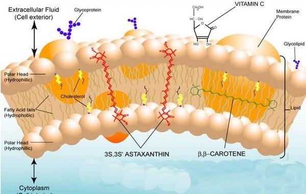 Astaxanthin natural